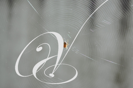 spin-in-web